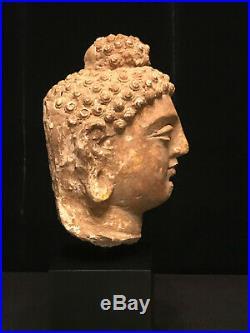 Very Nice Authentic 6th Century A. D. Gandhara Stucco Gautama Buddha Head